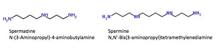 Putrescine and Cadaverine: Two Chemicals That Earned Their Names