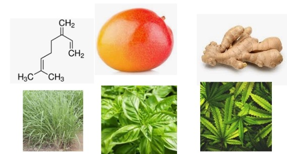 Figure 1. Myrcene, which was just banned as a food additive by the FDA occurs naturally in mango, ginger, lemongrass, basal, and marijuana, among others. ©The American Council on Science and Health