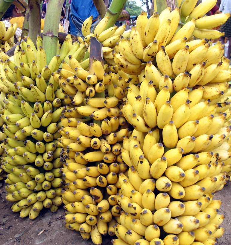 Let Them Eat Gm Bananas American Council On Science And Health