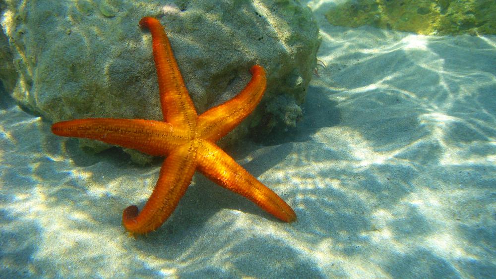 ผลการค้นหารูปภาพสำหรับ starfish