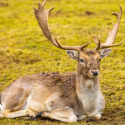 Image of: Cwd Is mad Cow Disease In Deer Threat To Humans American Council On Science And Health Cwd Is mad Cow Disease In Deer Threat To Humans American