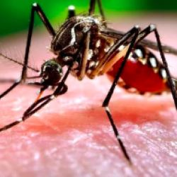 Why Is HIV Not Spread By Mosquitos? | American Council on