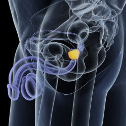Men and Prostate Cancer: Fact Vs  Fiction | American Council