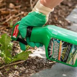 Moms Exposure To Monsanto Weed Killer >> If You Accept Science You Accept Roundup Does Not Cause Cancer